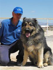 Caucasian Ovcharka - Guard Dog
